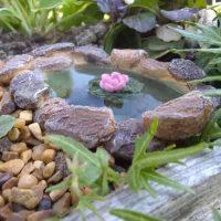 lilypad-pond